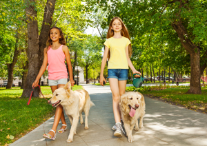 Two pre-teen girls walking dogs